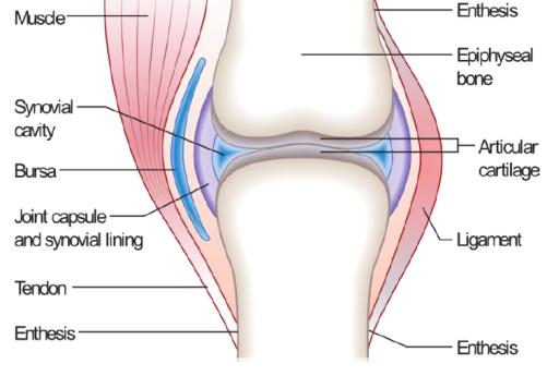 cartilage frame essentials