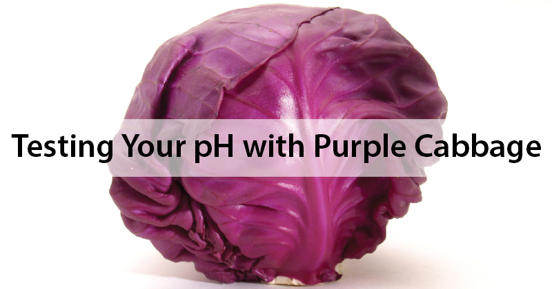 Testing Your pH  with Purple Cabbage