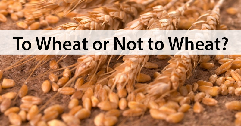 To Wheat or Not to Wheat … ?