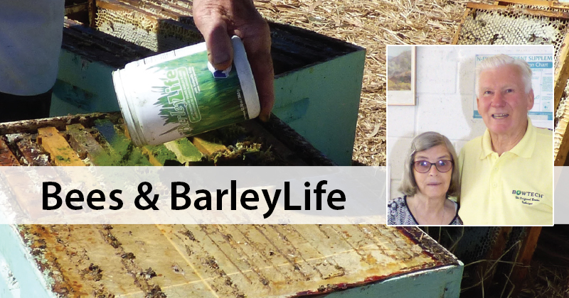 Bees and BarleyLife