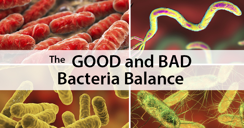 The Good and Bad Bacteria Balance