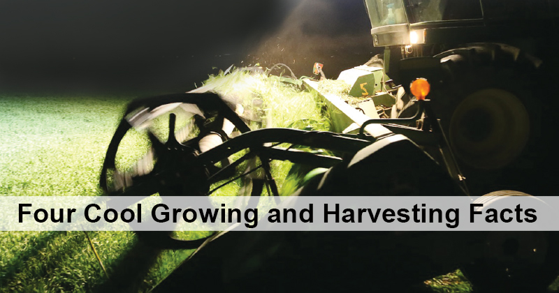 Four Cool Growing and Harvesting Facts