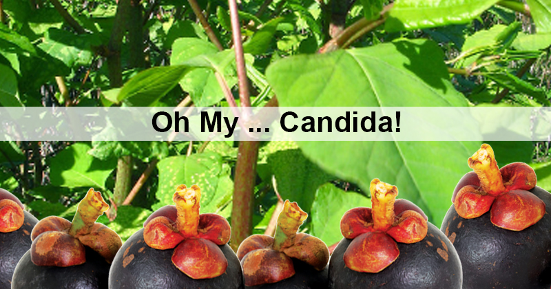 Oh My …Candida!