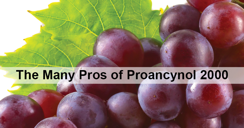 The Many Pros of Proancynol 2000