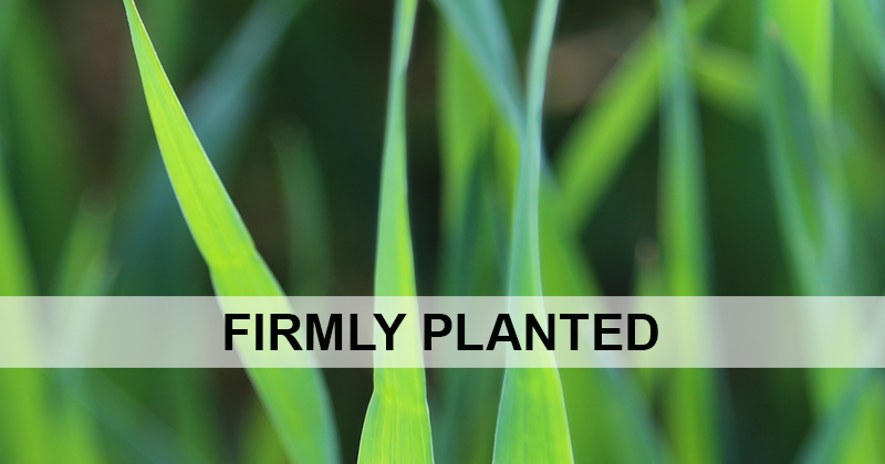 Firmly Planted